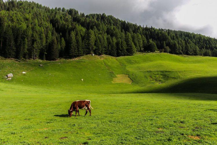 Stefano Costa Fotografo - Paesaggio di montagna 02